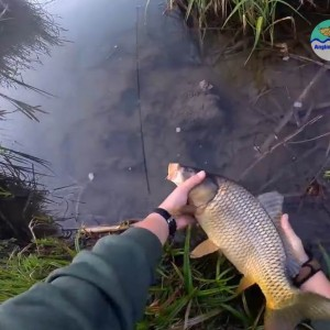 Увлекательная рыбалка на карпа